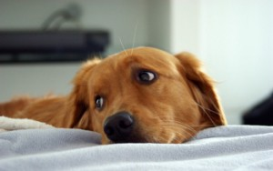 hd-sad-puppy-face-images_small